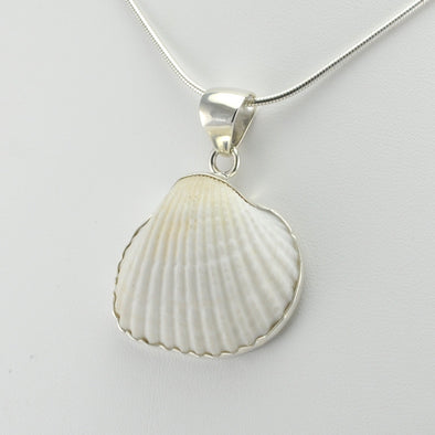 Side View White Ark Shell Pendant