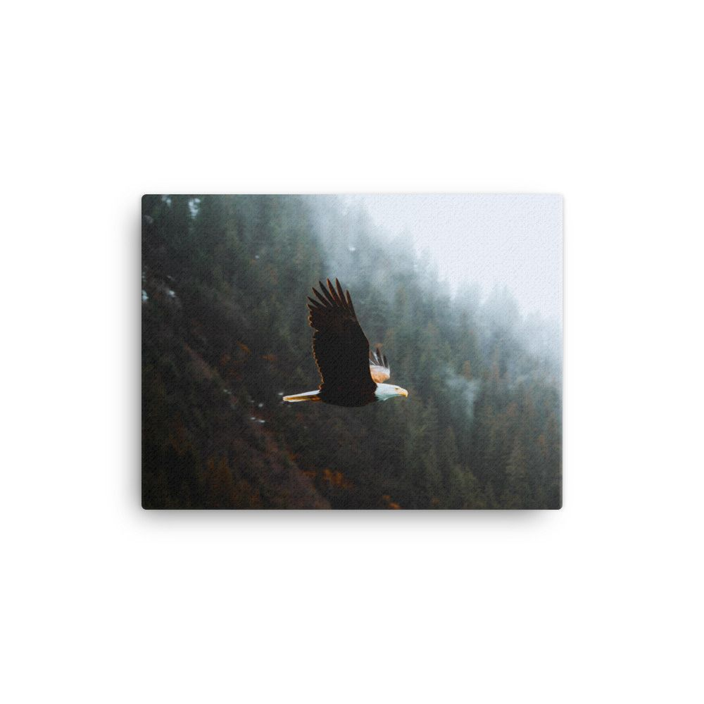 Flying Eagle In Kenai Fjords National Park