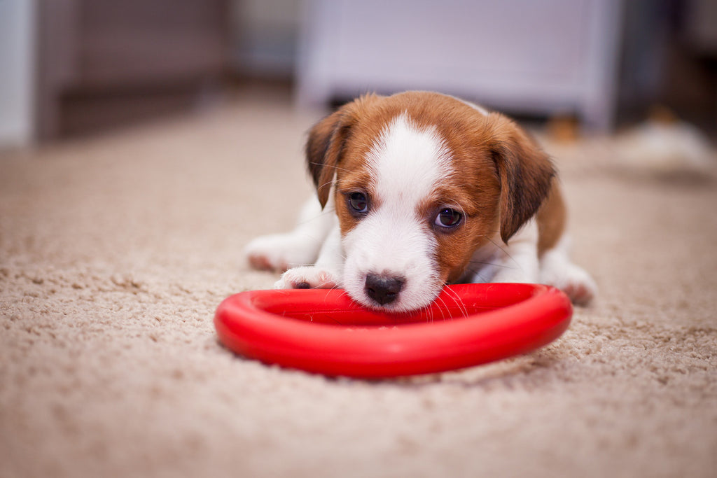 Tips on Training Your Puppy