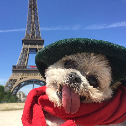 Marnie's trip to France
