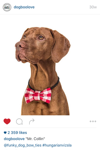 FUNKY DOG na instagram Dogboolove