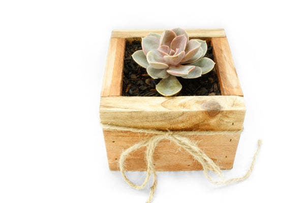 Mini DIY Succulent Planter Kit