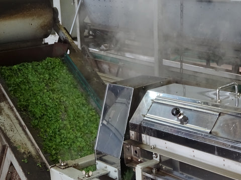 The Steepery Tea Co. - Watanabe tea garden processing equipment