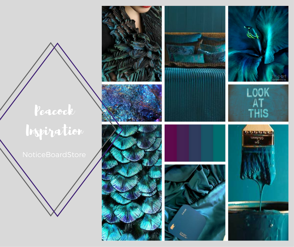 Super Shimmering Peacock Feather Colour Inspiration NoticeBoardStore