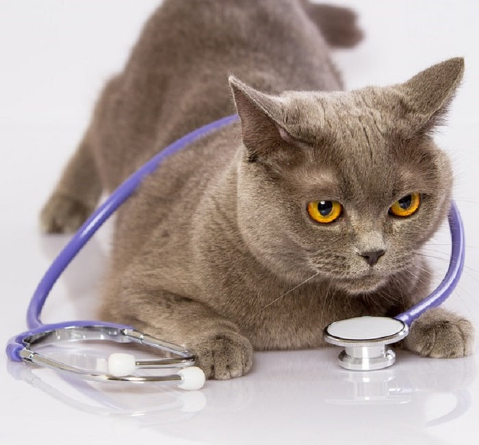 Healthy Cat Owners Need A Healthy Check Up