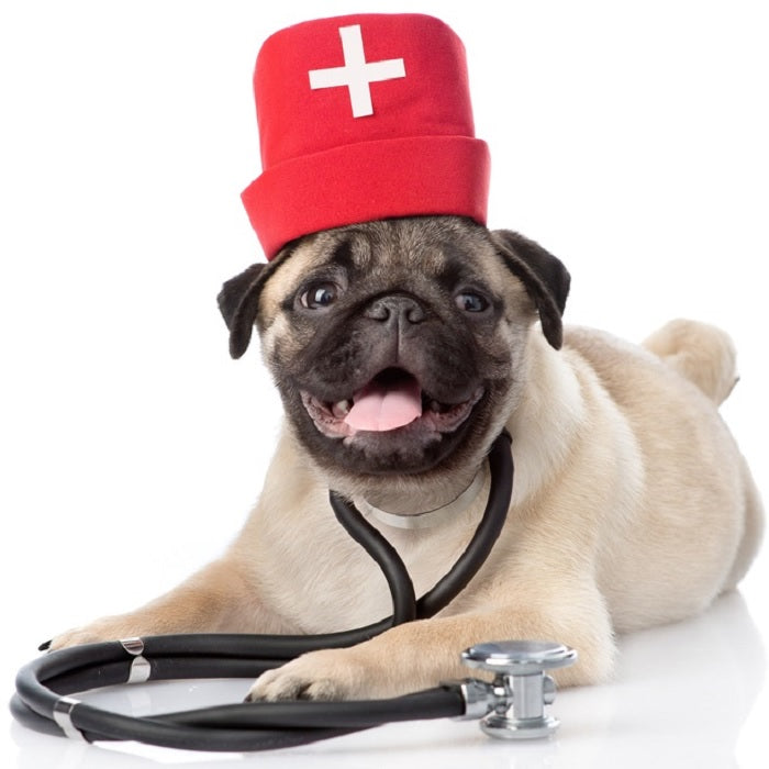 Health dog owners need to get a Health Check Up