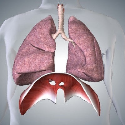 Learn And Play With YourSelf Lungs