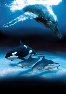 Dolphins And Whales Poster 24x36 art 24x36 - Fame Collectibles