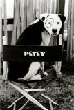 Little Rascals Petey Puzzle Jigsaw Puzzle - Fame Collectibles