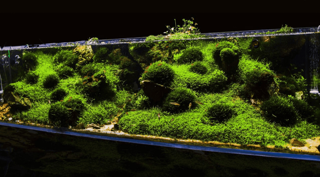 10 Best Aquarium Moss for your Aquarium that you need to know