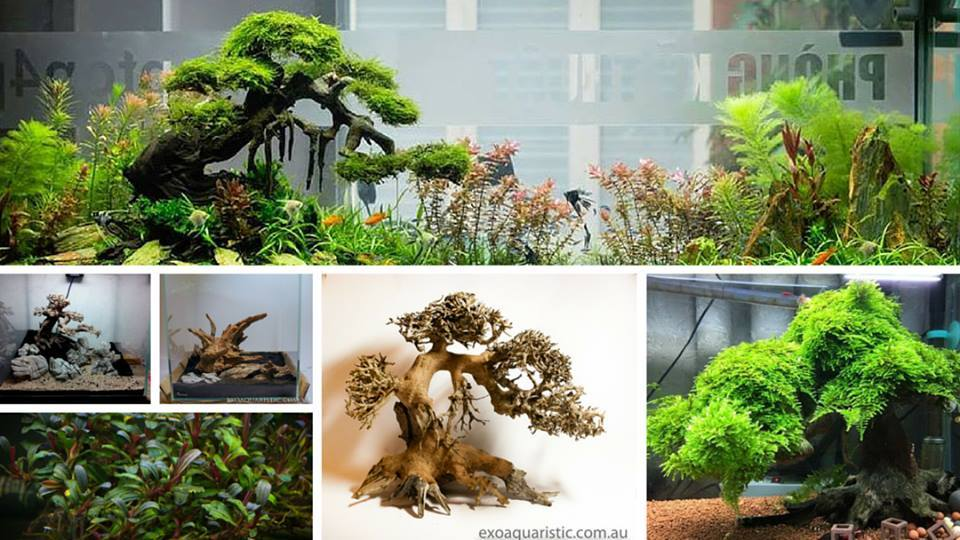 27 Best driftwood For Aquarium | Driftwood Types Of All Time