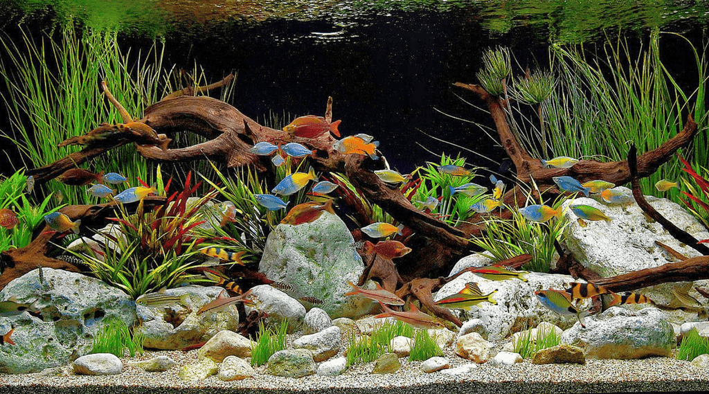 4 Tips for Starting a Freshwater Aquarium