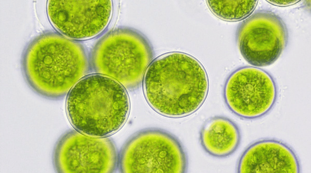 Have Problem With Algae ? Aquarium Algae 101 is here to help