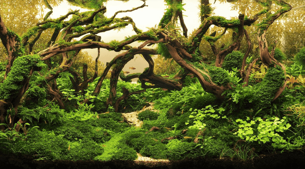 A Brief Guide to Progressive Aquascaping