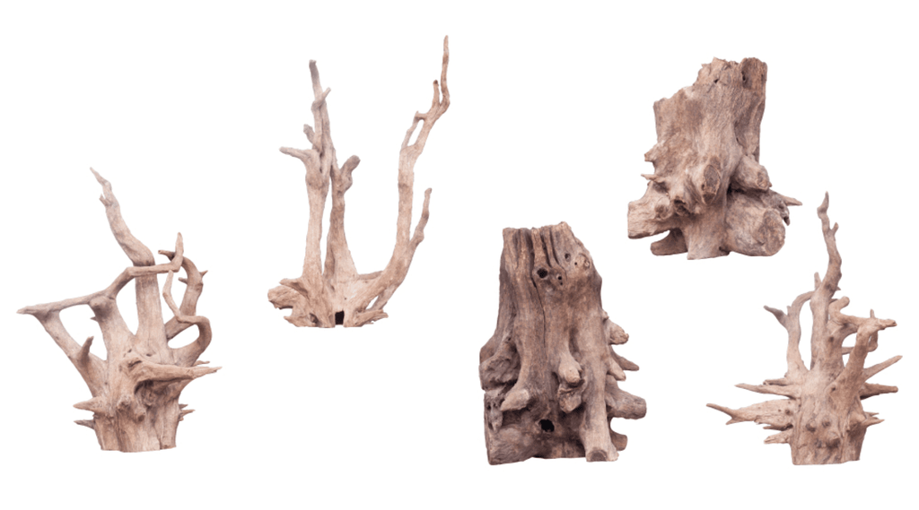 Aquarium Driftwood – The benefits of adding driftwood to your aquarium
