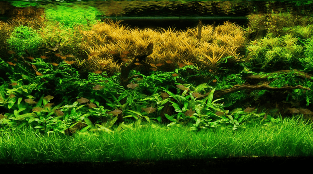 Aquarium Plants To Purify Your Aquarium Water