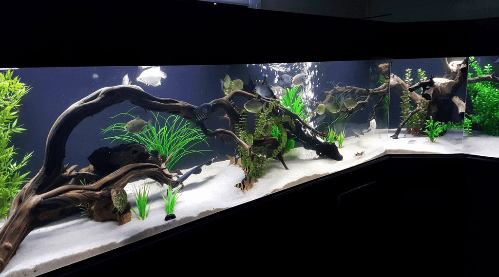 Aquascaping Inspiration Part 1 - Bonsai Styles