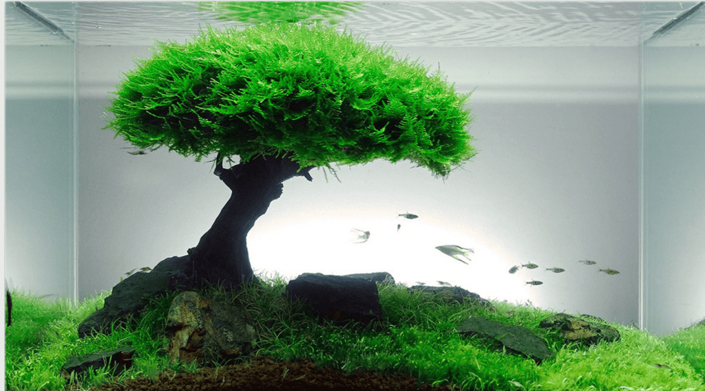 Benefits of having a Bonsai Driftwood for your aquaspace