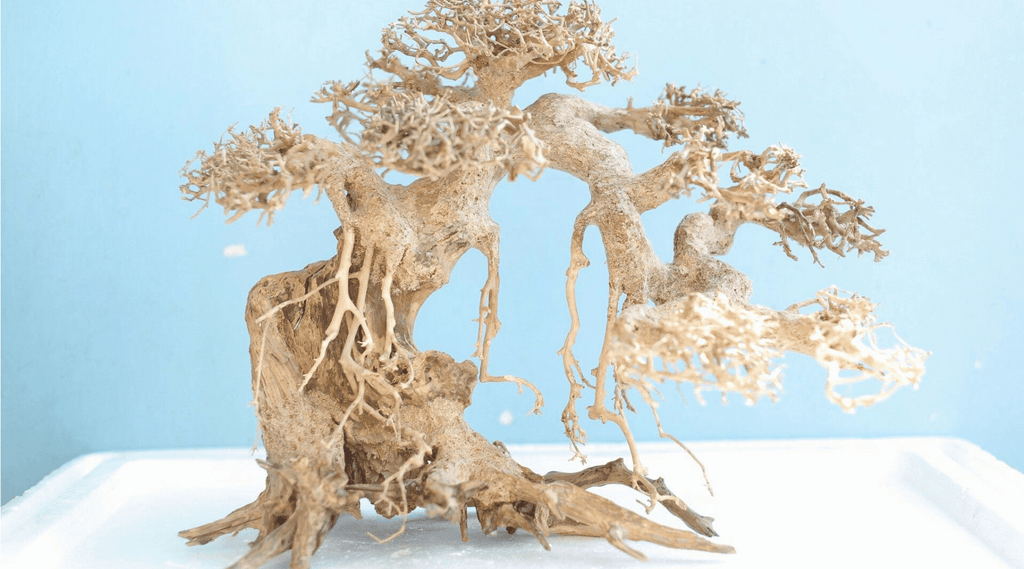 Bonsai Driftwood - Miniature tree growing at its best