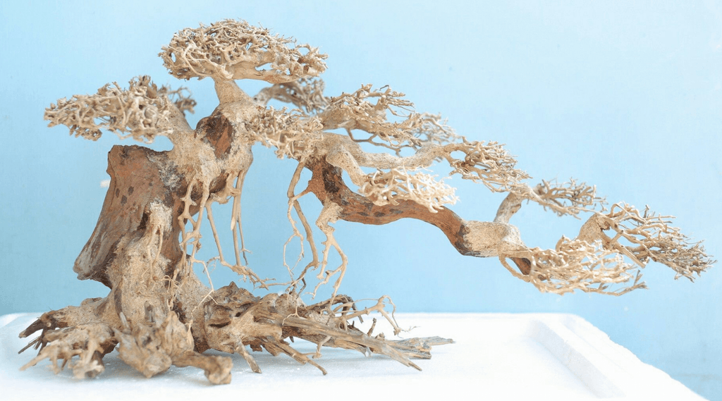 Bonsai Driftwood – What Is it and How You Can Make One On Your Own