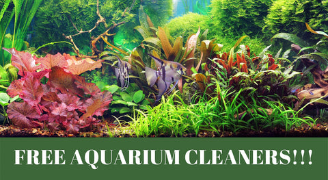 6 ways to ave free aquarium cleaners!