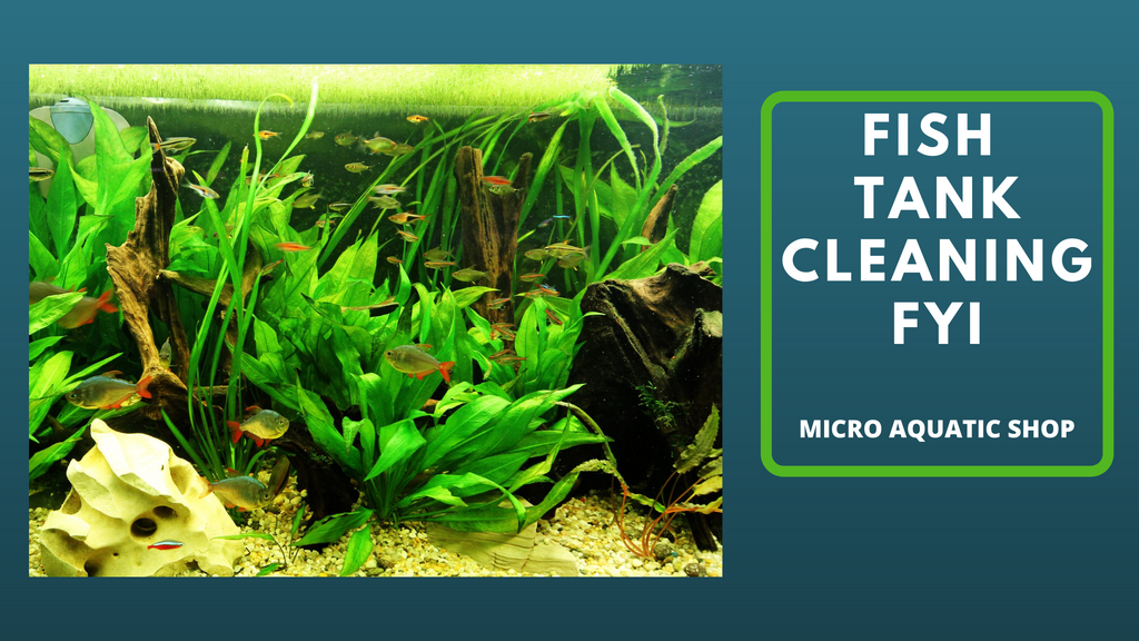 Fish tank cleaning FYI