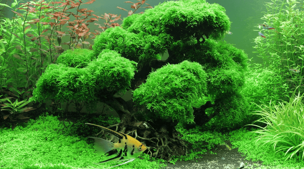 Get Started With Aquascaping