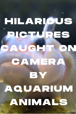 Hilarious Pictures Caught On Camera By Aquarium Animals