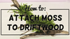 How To Attach Moss To Your Aquarium Driftwood