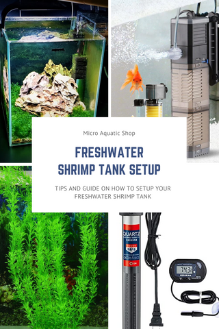 How to Set Up a Freshwater Shrimp Tank
