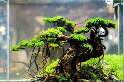Bonsai Aquascape - Aquascaping Bonsai Step By Step Guide