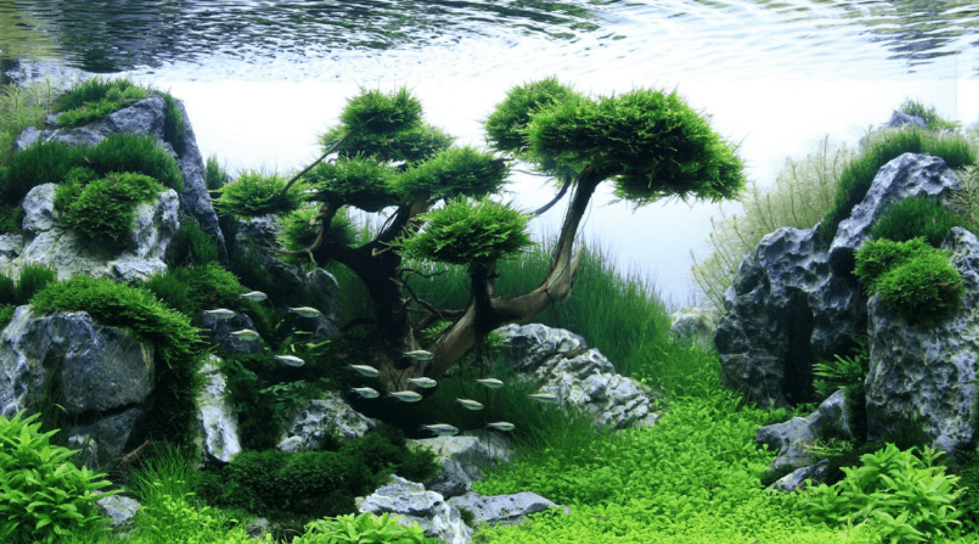 Aquascaping Inspiration Part 2 - Exotic Aquaristic