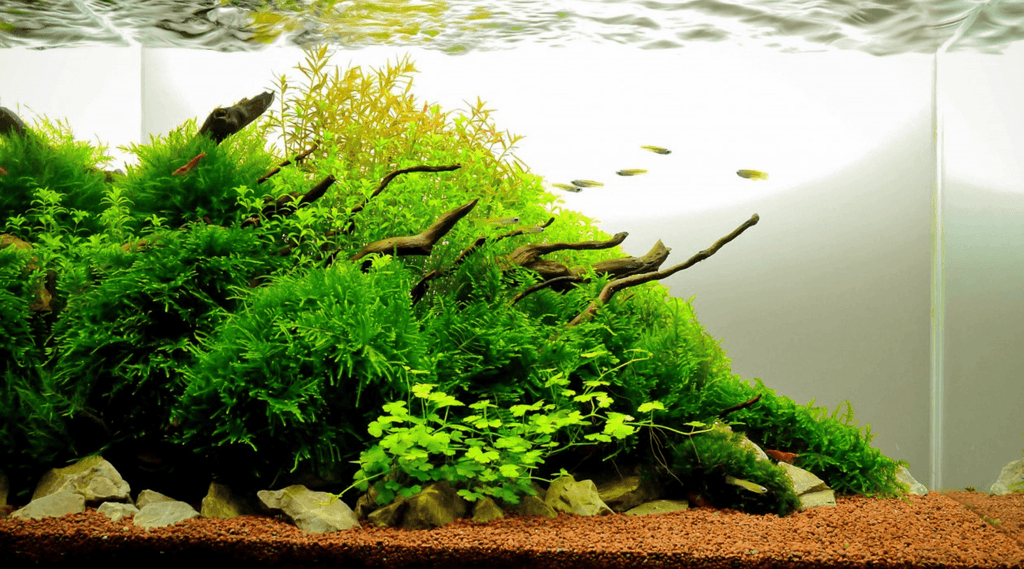 Beautify Your Aquarium with Natural Driftwood