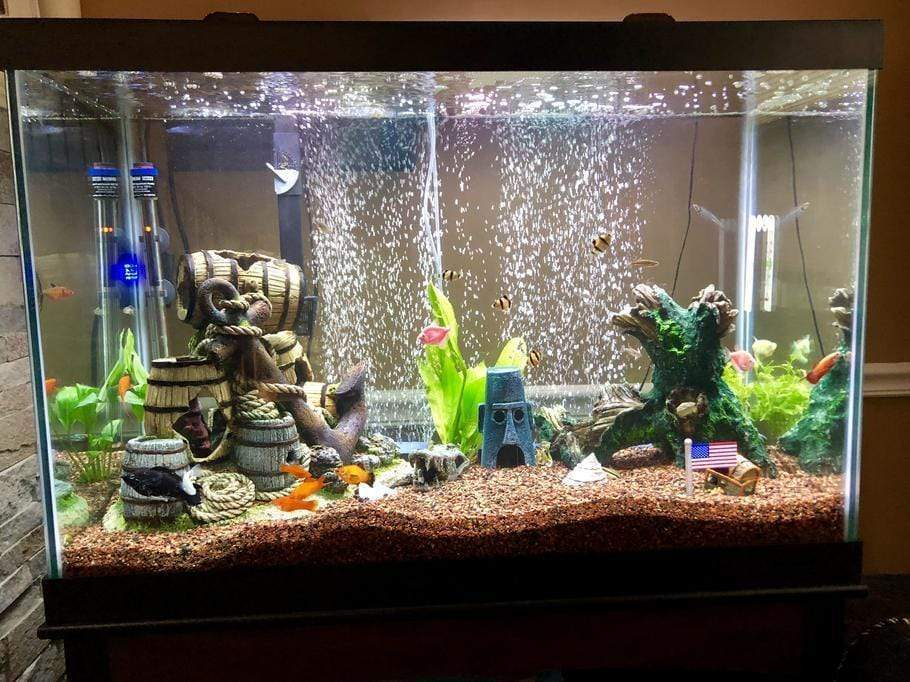 Tips on Aquarium Care and Cleaning to Keep Aquarium Water Crystal Clear