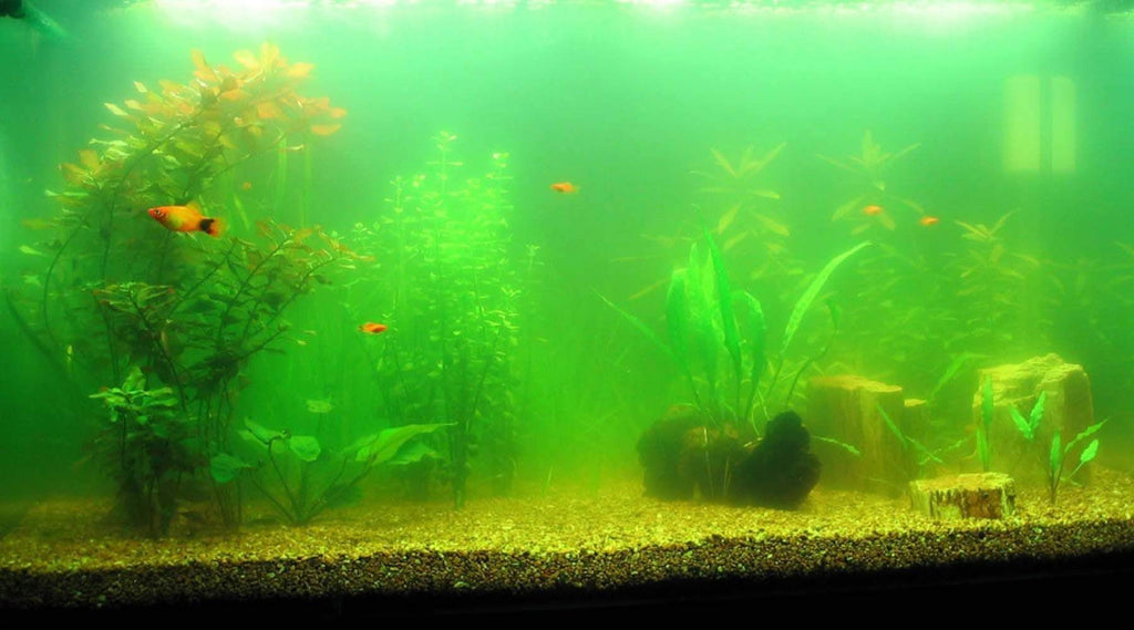 Aquarium Algae 101 - Everything You Need to Know About Them