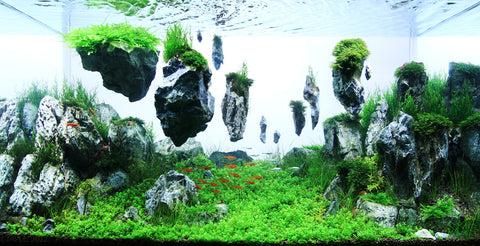 Aquascaping Fuels Imagination And Creativity. When Completed, The Artist  Has The Pleasure Of Watching Marine Life Enjoy The Complexity Or Simplicity  Of ...