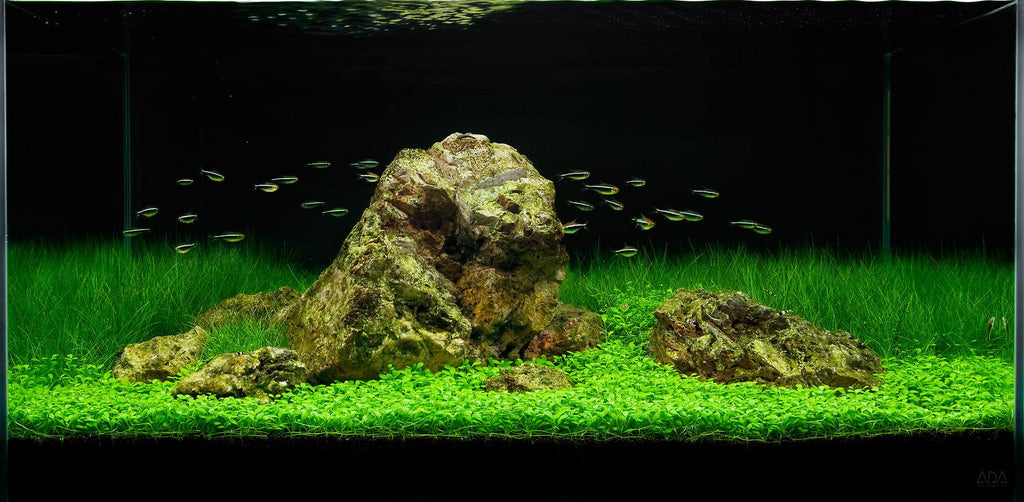 Aquascaping Designs