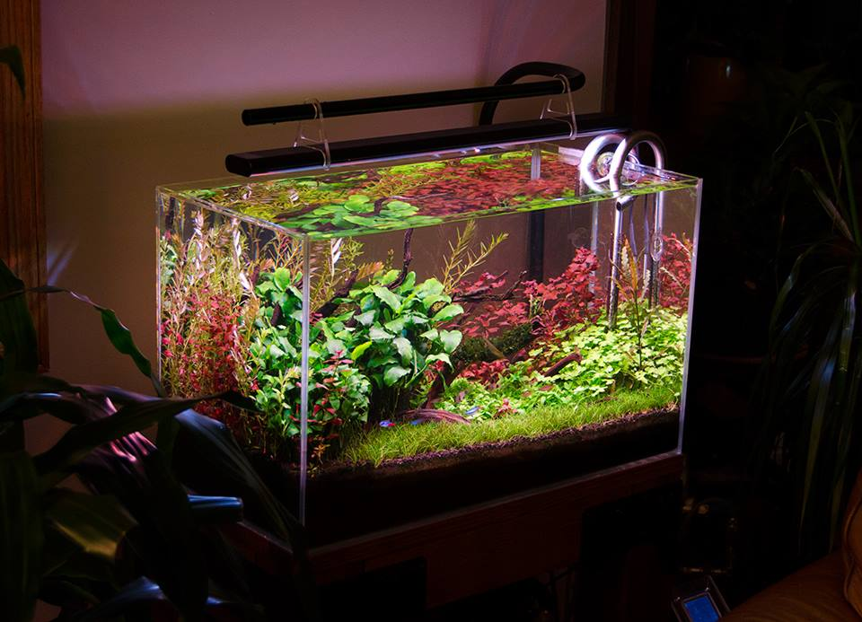 Aquascaping Gallery