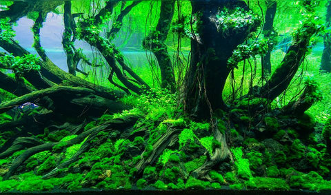 natural driftwood for fish  tank