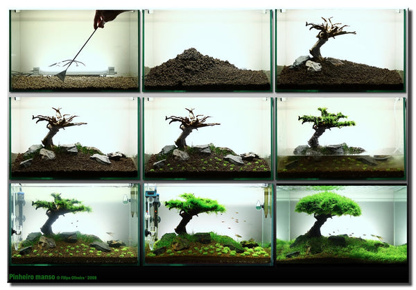 Masterpiece Bonsai Driftwood for Aquarium