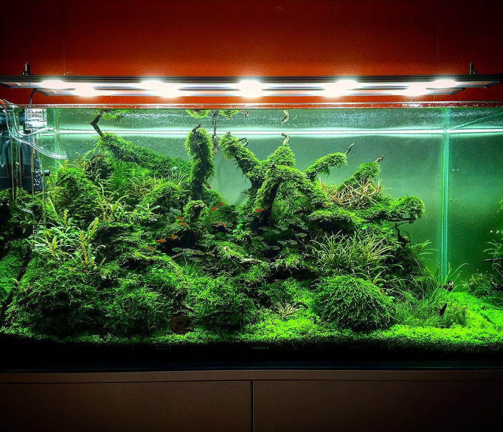 Types Of Aquarium Moss For Aquascaping Different Aquatic Mosses