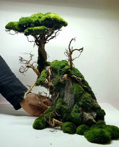 Aquascaping Bonsai