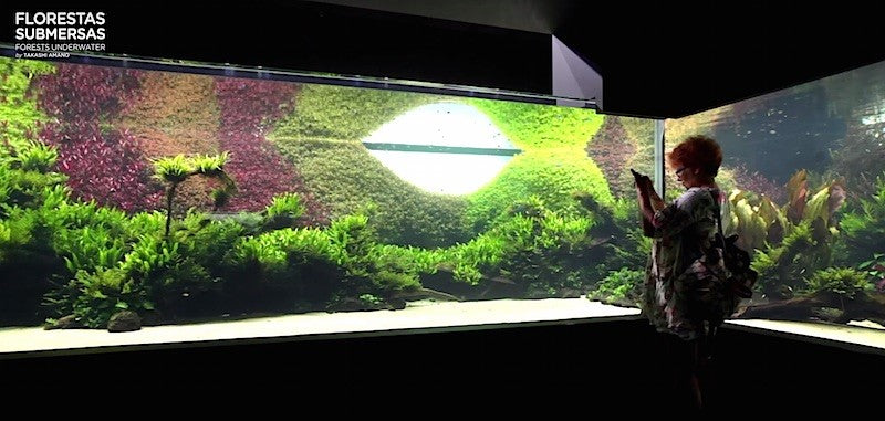 Key elements of success with aquascaping