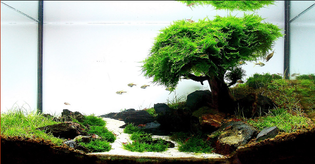 Bonsai Aquascape