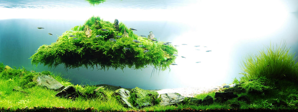 importance of Aquascaping