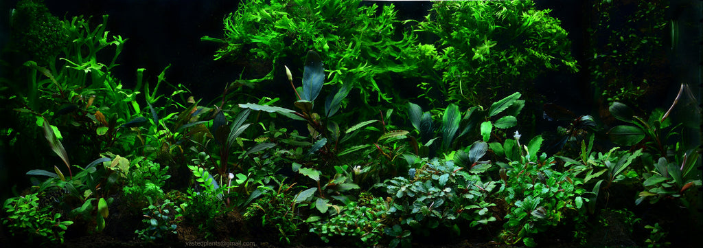 Aquarium Plants that clean water pollution