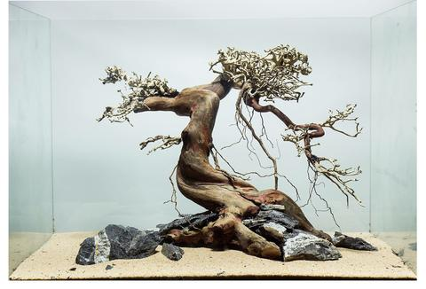 How to make create bonsai driftwood