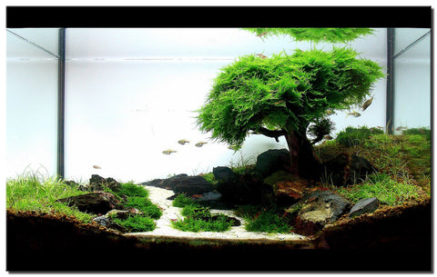 Fish Tanks And Terrariums Are Attention Grabbing Items U2013 Why Not Make These  Objects As Beautiful ...