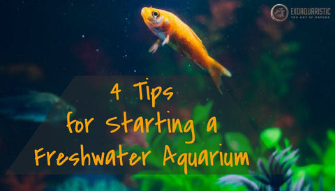 4 Tips for Aquarium Startups
