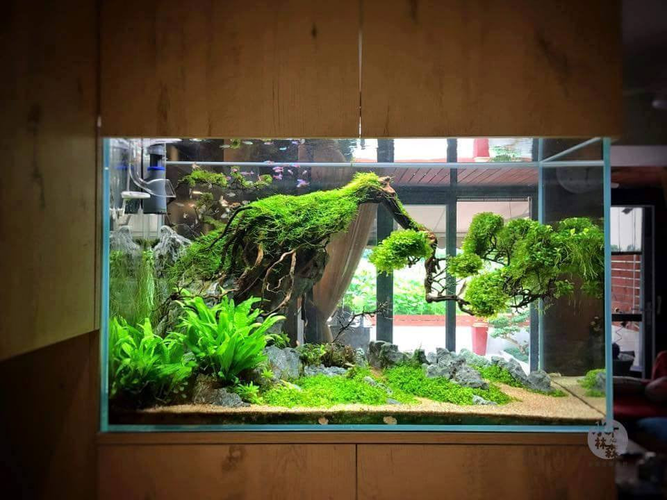natural driftwood for aquarium